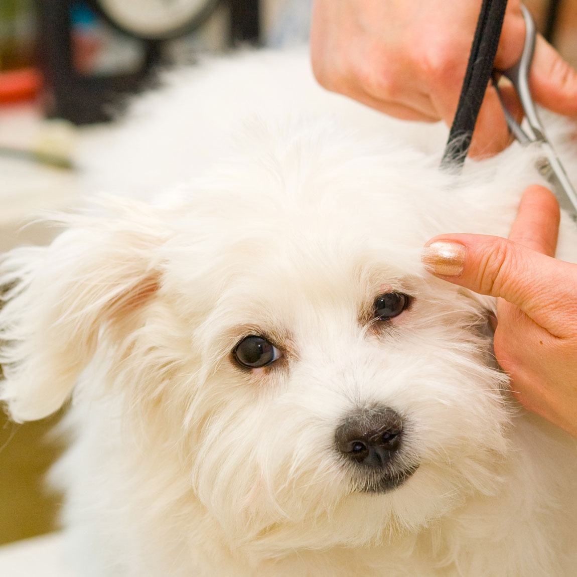 Корма для собак Роял Канин в Одессе. Сравнить цены, купить